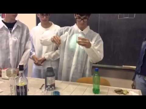 Relazione sulla prova di estrazione del DNA