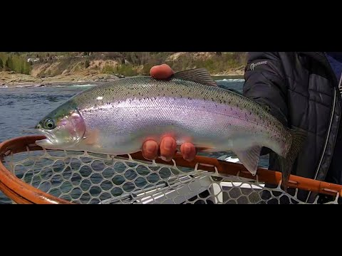 How To Fish Midges (chironomids) On Big Rivers