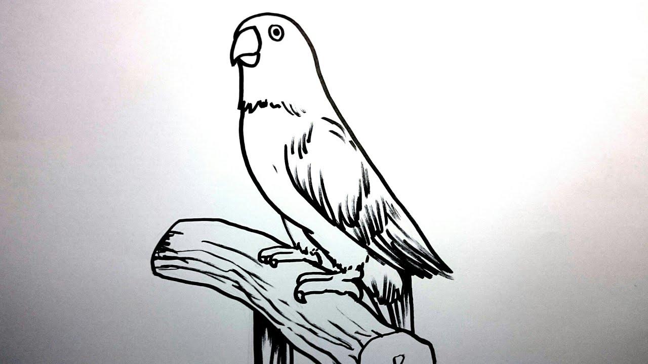 Menggambar Burung Lovebird Dengan Mudah