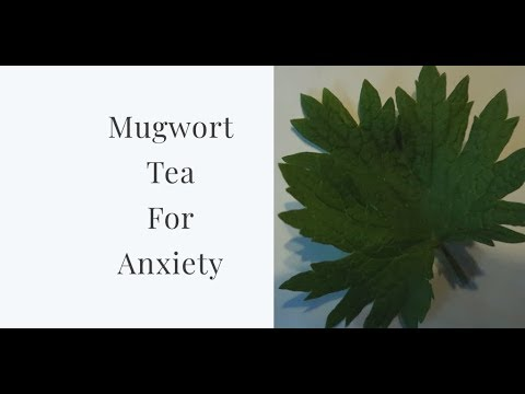 mugwort-tea-for-anxiety