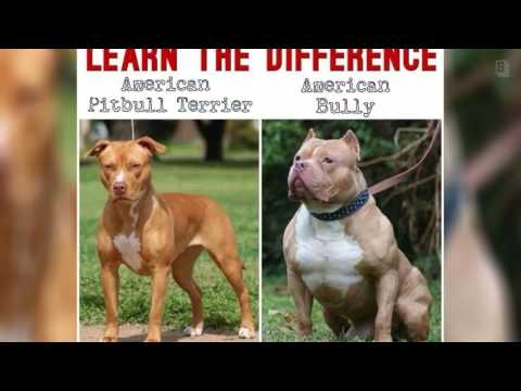 PLEASE LEARN THE DIFFERENCE