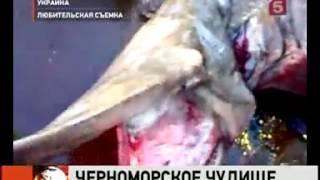 Акула в Черном море(, 2012-10-05T11:34:42.000Z)