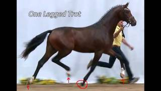 The Million Euro Coup In Horse Breeding - Spectacular Gaits vs. Health