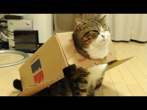 Silly cats - Funny cats compilation
