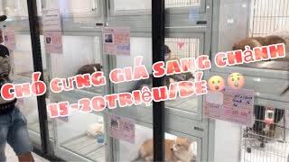 Nơi bán Chó Cưng trong AEON MALL Tân Phú ở khu nào???