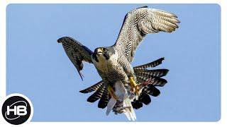 Самые Быстрые Птицы на Планете