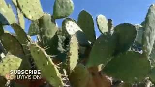Degollado Jalisco Aventuras en La Campana