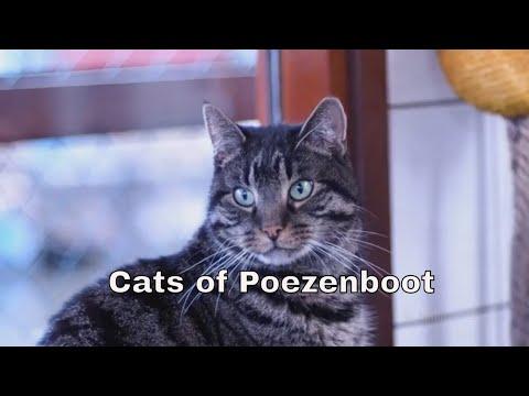 De Poezenboot: la casa galleggiante per gatti ad Amsterdam