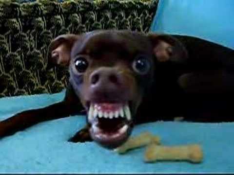 Alien dog - 'Animal Instinct'.