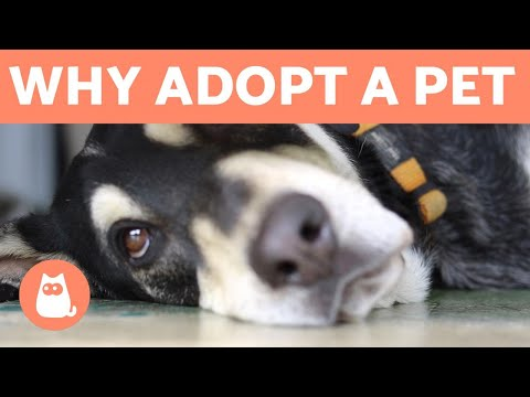 Why To Adopt A Pet And Not Buy 💖 5 REASONS