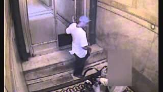 Hamilton Heights Robbery