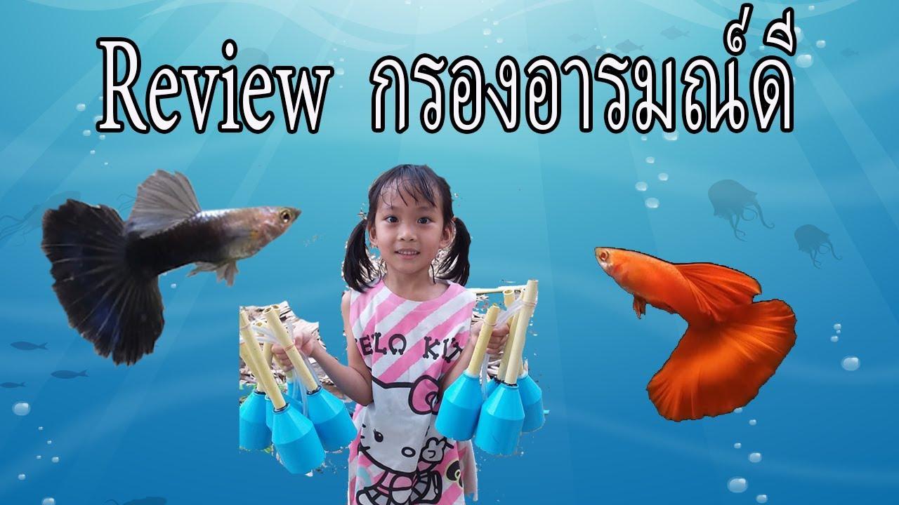 การเลี้ยงปลาหางนกยูงเกรด EP.24 Review การใช้งานกรองอารมณ์ดี