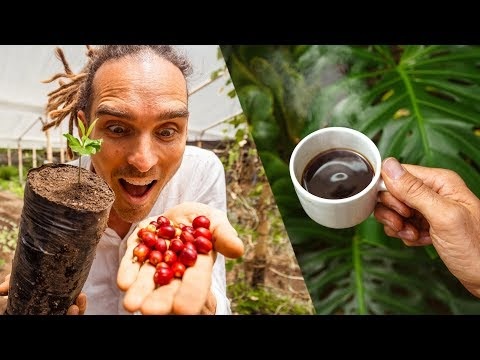 How To Make Coffee From Scratch In Colombia