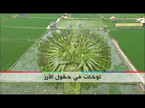 بي_بي_سي_ترندينغ|  #بالفيديو: لوحات فنية بحقول الأرز في #الصين  - نشر قبل 1 ساعة