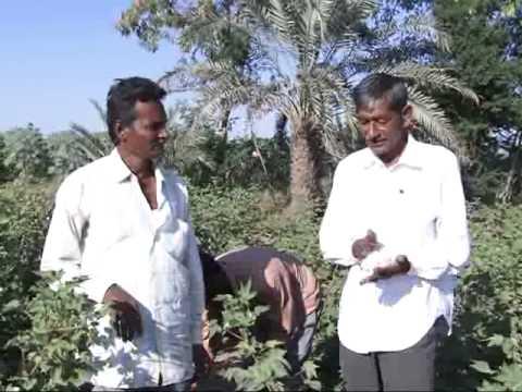 Vinayak Biochem India's Pure Organic Liquid Fertilizer