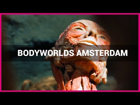 BODY WORLDS Amsterdam - Impression of the exhibition