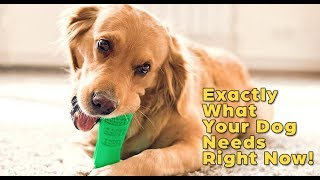 Exactly What Your Dog Needs! World's Most Effective Toothbrush for Dogs