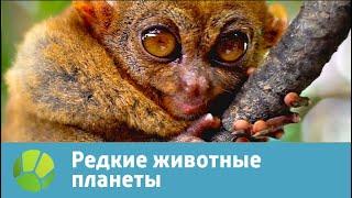Редкие животные планеты   Живая Планета