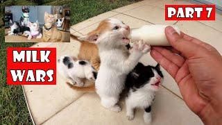 Falta la madre de los gatitos. Debo ser su madre. Parte 7: Guerra de leche de gatitos.
