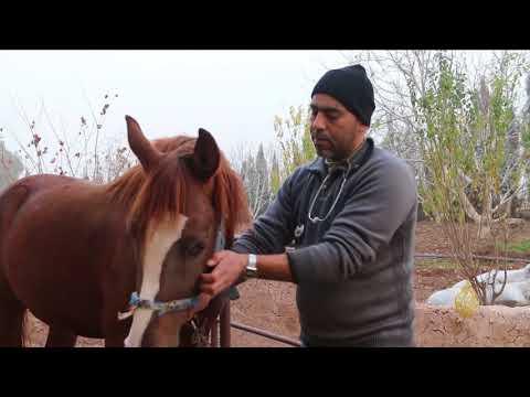 الحصار يفاقم معاناة مربي الخيول بريف حمص  - نشر قبل 53 دقيقة