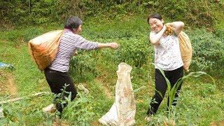 爺爺奶奶忙著摘辣椒,媳婦說要回家,為啥老人也急忙回家