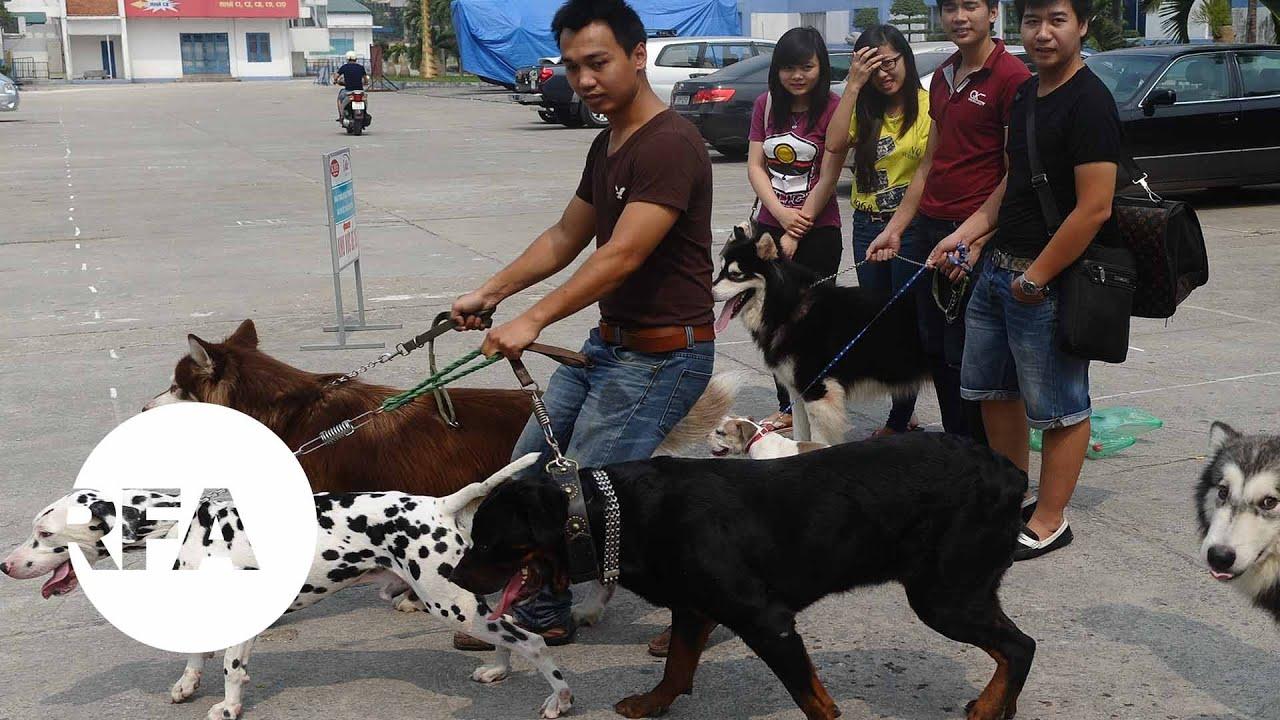 Chó nuôi cắn người: xử chủ thế nào?