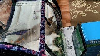 Как тайские котики вместе смотрели фильм про птичек! Тайские кошки - это чудо! Funny Cats