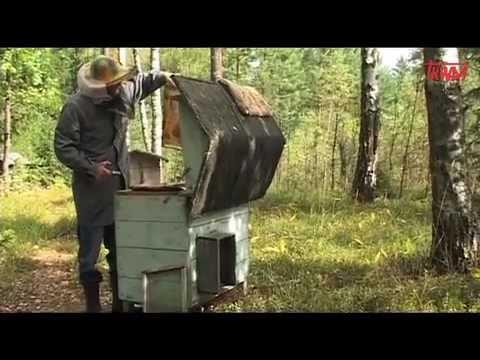 pszczoły-odcinek-8-na-tropie-program-myśliwski-tv-trwam.mov