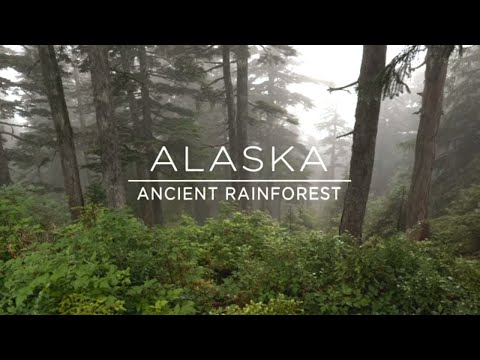 Tongass National Forest| Northernmost Rainforest in the World
