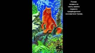 8 племён котов воителей