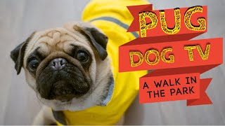 PUG DOG TV  A WALK in the PARK & CALMING MUSIC