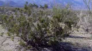 Desert near Borrego Springs, California