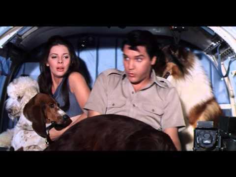 Paradise Hawaiian Style- Dogs
