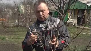 Обрезка молодых деревьев весной 160416 2016 4 18 10 0(Обрезка молодых деревьев весной., 2016-06-18T09:26:55.000Z)