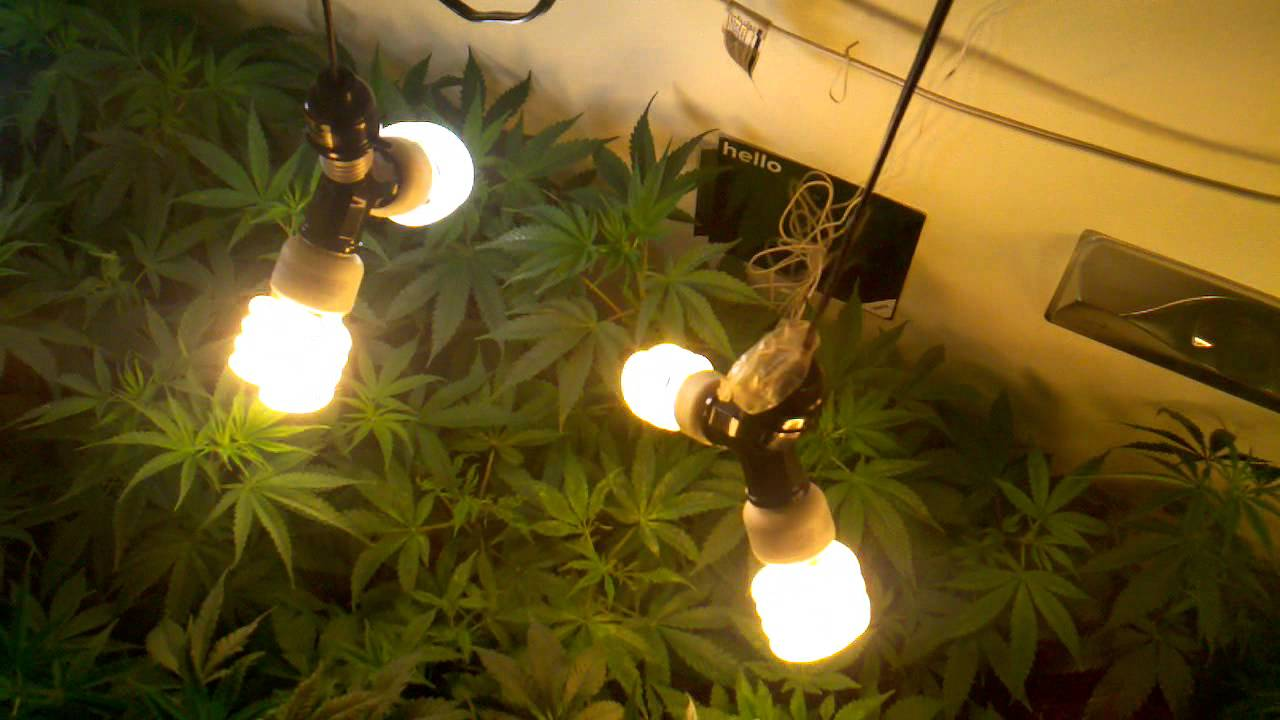 Make A Grow Room In Your Closet