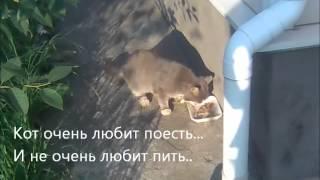 "Сюжет о том,как живёт кот ""Борис"" на даче.."