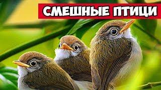 Пингвины, циплята, чайки смешные птицы | Bazuzu Video ТОП подборка июнь 2017