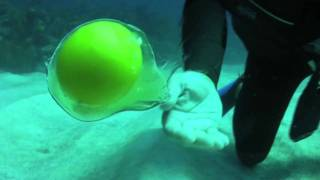 BIOS-Water Moves: The Egg!