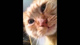 Battle (MJ Cole Dub Mix) - Wookie ft. Lain