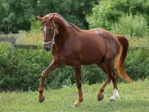 Ржание лошади