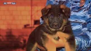 """وزير الخارجية الروسي يتضامن مع نظيره الفرنسي بــ """"كلب"""""""