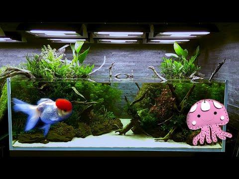 jepang,-tokyo:-ikan-di-ueno-park-&-sumida-aquarium