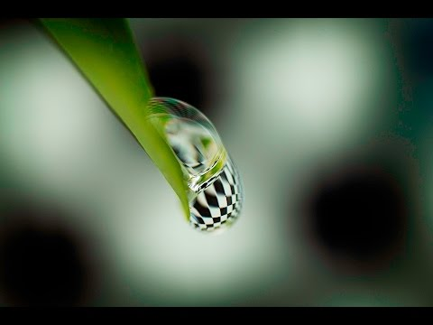 MACRO PHOTOGRAPHY TUTORIAL - 5 Tips For Water Drop ...