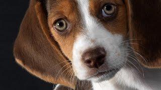 Âm nhạc cho Chó con và chó - Ngủ vật nuôi của bạn