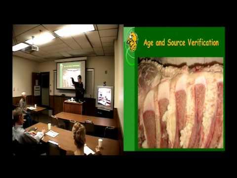 Adding Value to Calves Through Source and Age Verification, etc.