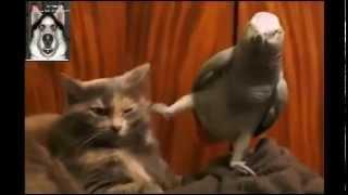 Смешные приколы .Попугай придрался к коту.