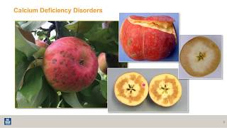 Intro to apple nutrition:  how nutrients affect fruit quality (1 of 8)