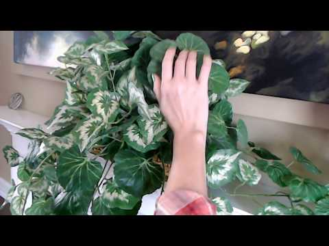 ASMR Request   Spraying & Cleaning Artificial Plant