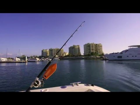 Deep Sea Fishing Trips in the United Arab Emirates (UAE)