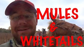"""WOUNDED WHITETAIL BUCKS & SADDLE MULES """"The Ultimate ATV"""""""